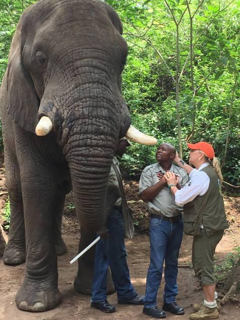 ElephantLoesje.jpg